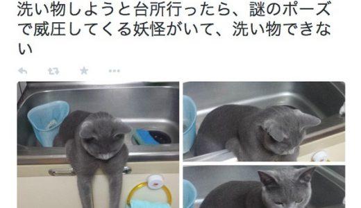 【ネコ】台所に謎のポーズの猫妖怪が現れたとツイッターで話題に