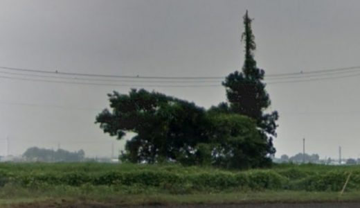 まるで「ネコバス」と話題の群馬県邑楽町藤川の木をGoogleMAPでみた結果