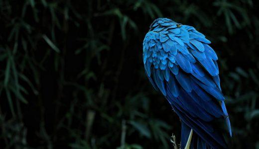 真っ青の見たことのない鳥が発見、衝撃の事実が発覚する