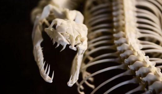 頭部のない、謎の生物の遺体が海岸に打ち上げられる